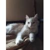 Ищут дом и ответственные и любящие ручки мама кошка и её сынок.
